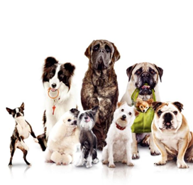 cranford nj professional pet sitter