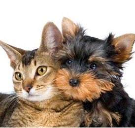 union county nj pet sitter